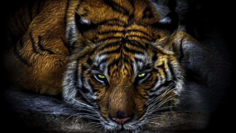 Bengal Tiger Picture Bengal Desktop Free Tiger