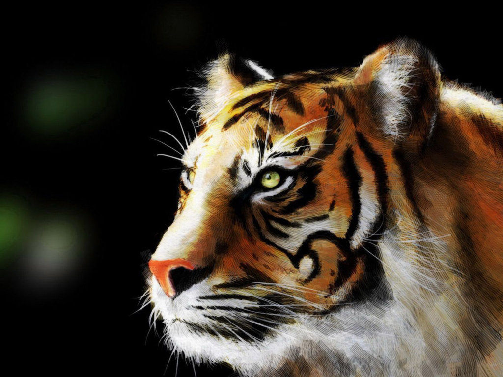 Cute Tiger Cub 4k Desktop Wallpaper For 4k Ultra Tv Hd