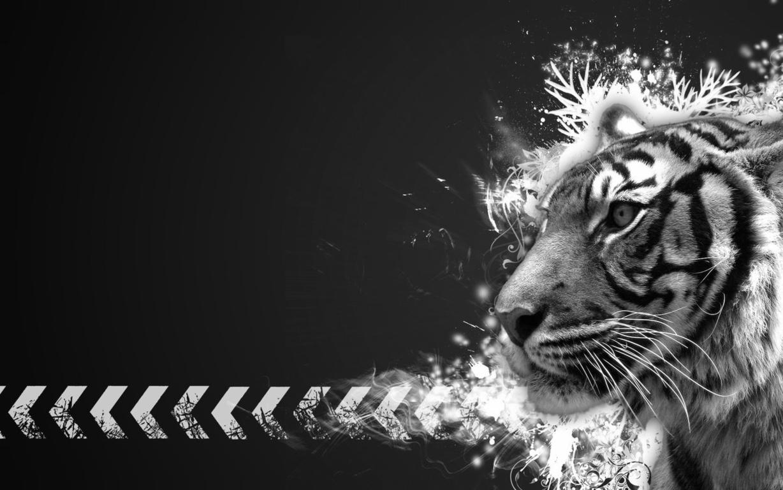 Cute Tiger Cub Desktop And Mac Wallpaper Pc