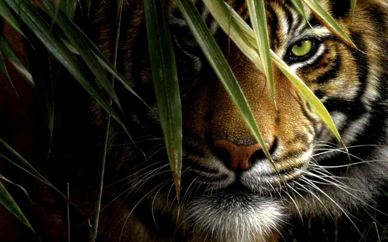 Cute Tiger Cub Desktop And Mac Wallpapers Pc