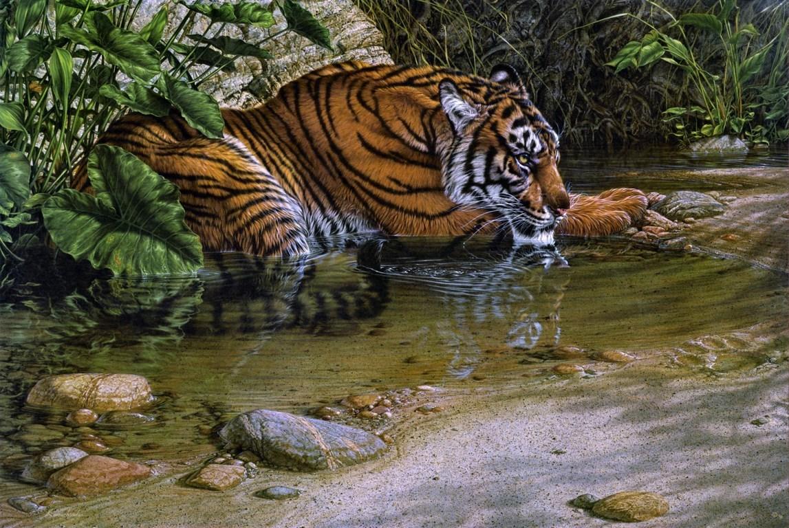 Cute Tiger Cub Desktop Background