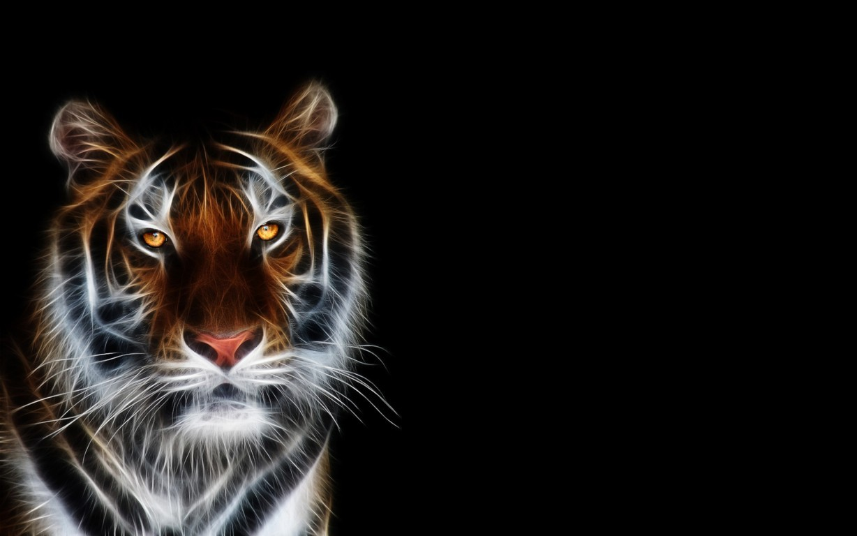 Cute White Tiger Picture Desktop Wallpaper
