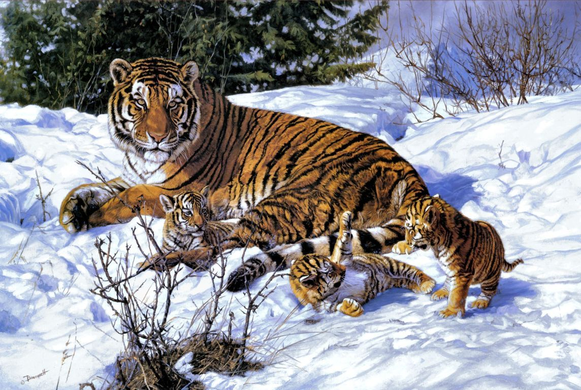 Featured Wallpaper Wild Cute Baby Tiger Animals