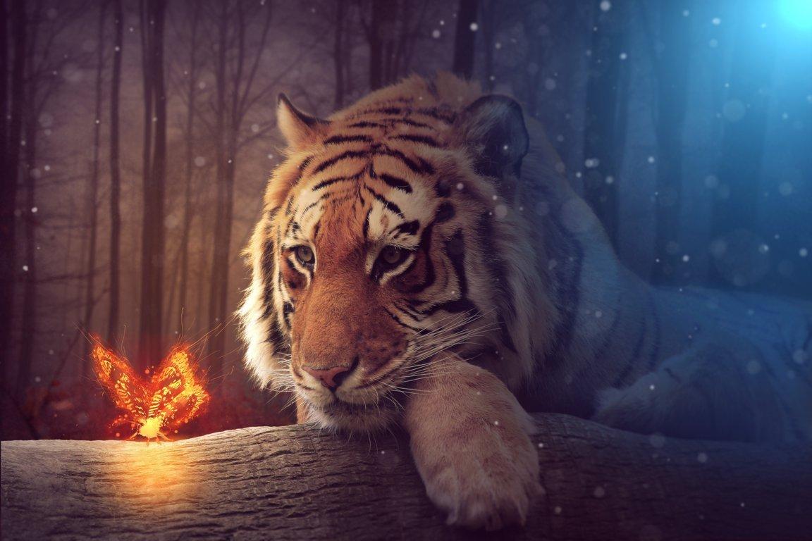 HD Wallpapers Tiger