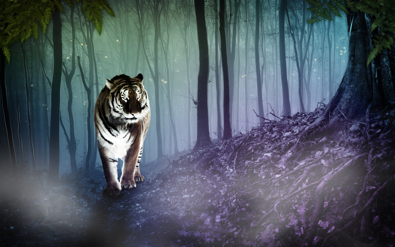 Sharanbaswa On Walks Tiger Animal Wallpaper