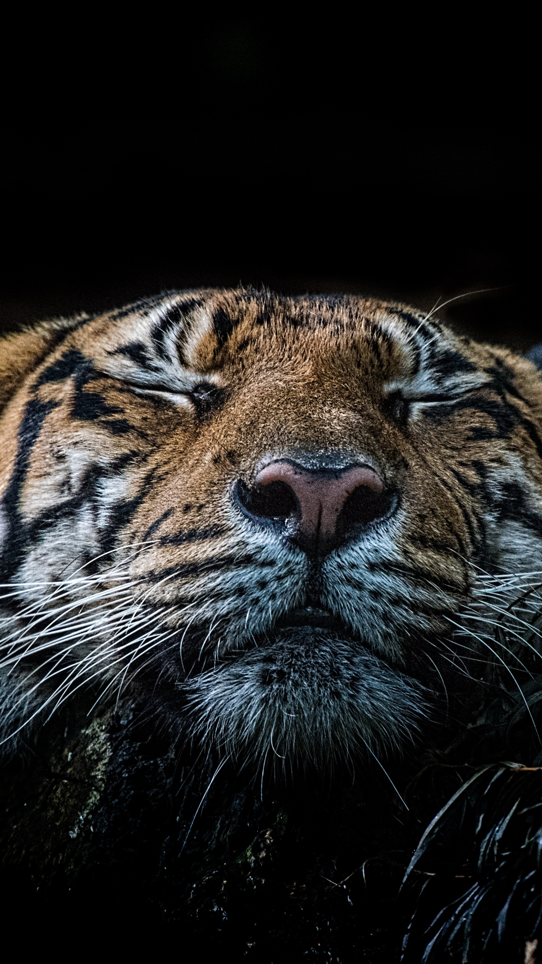 Tiger Mobile Phone Wallpapers Wallpapers Download For Mobile Phone Hd