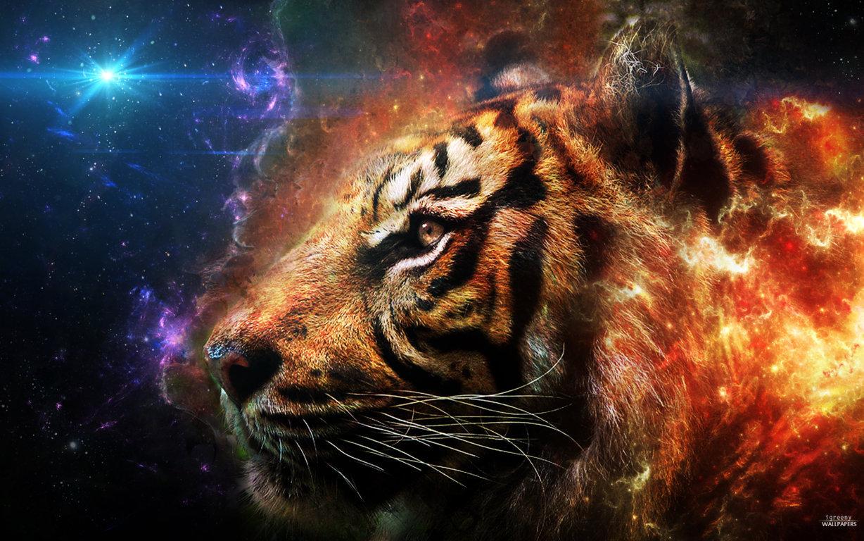 Tiger Photo Wallpaper