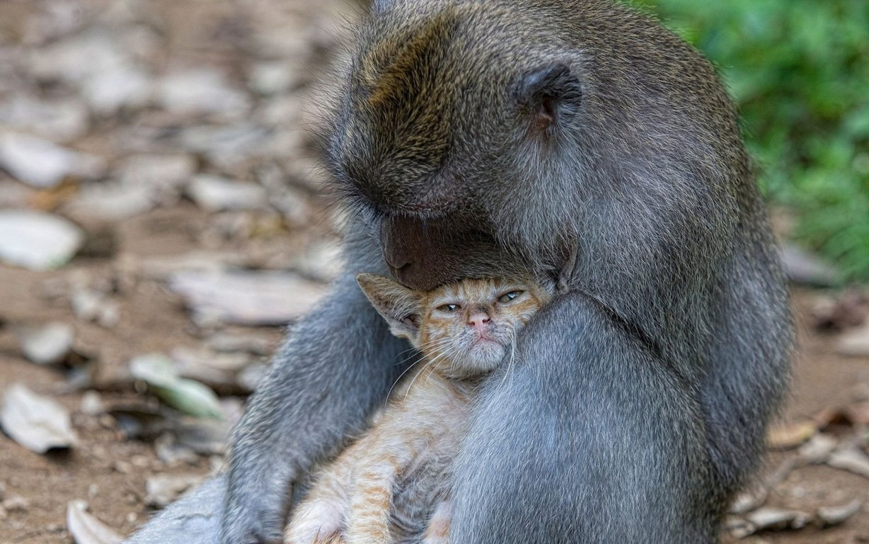 Baby And Mother Monkey Tree Free Desktop Backgrounds In