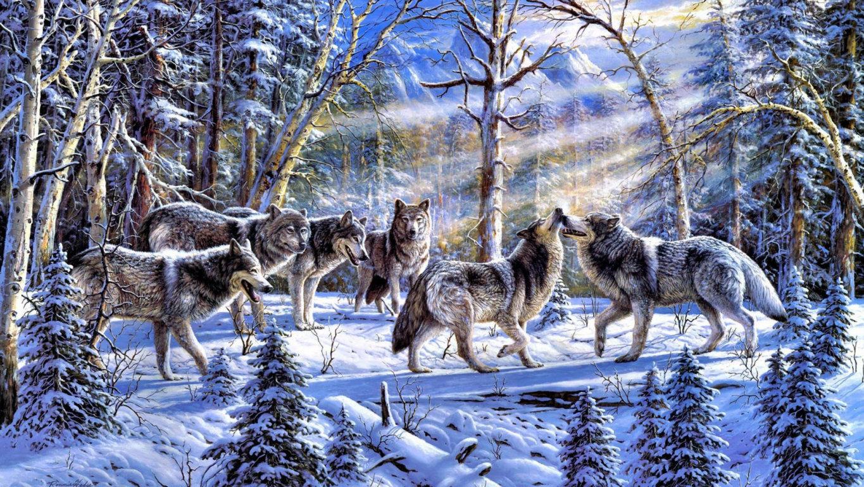 Cool HD Wallpaper Wolf Wallpaper