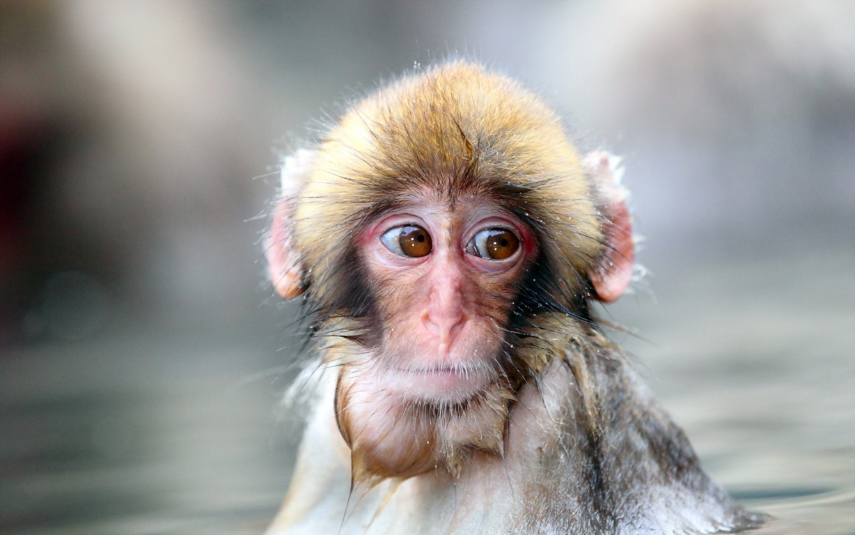 Cute Little Monkey Android Android Hd Wallpaper Wallpaper