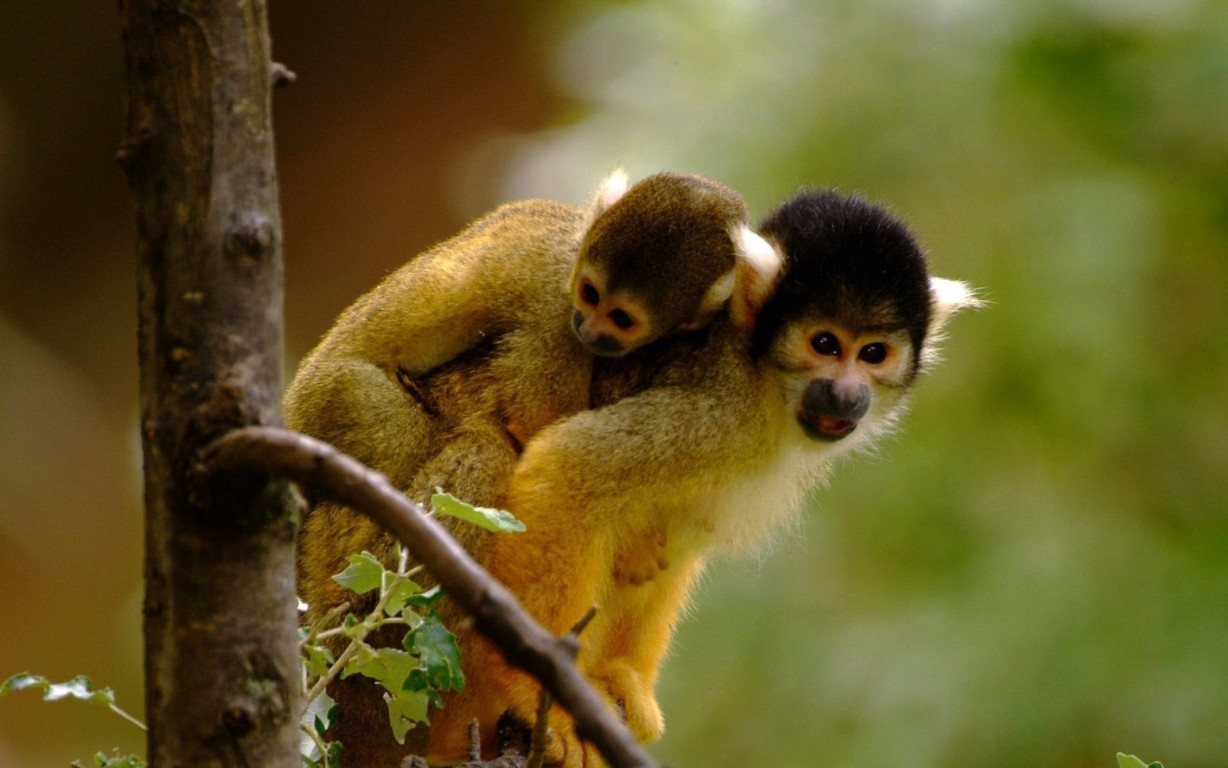 Cute Monkey With His Hd Animal Photo Download Hd Cute Monkey Child