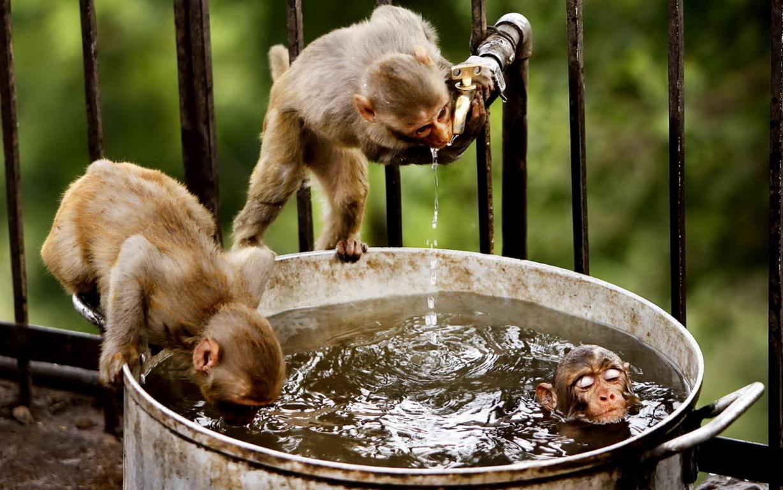 Cute Monkeys Hd Wallpaper Image Background
