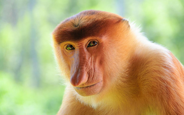 Cute Monkeys Wallpaper 21 Fox And The Tarot The