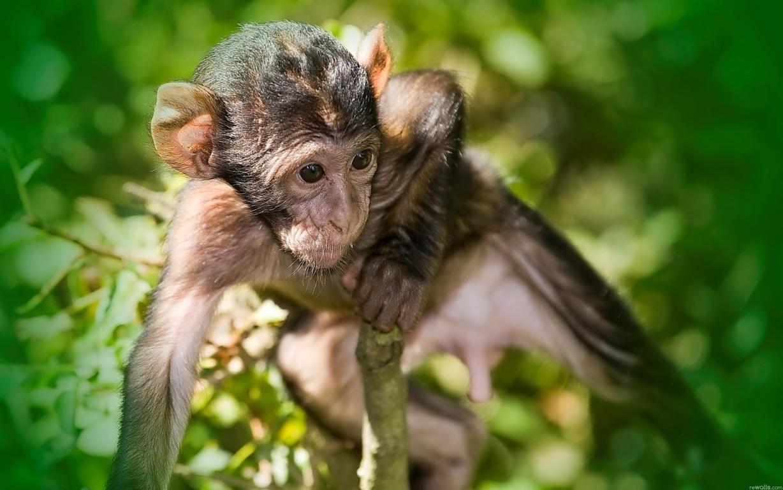 Cute Monkeys Wallpaper Iphone Hd Animal Wallpaper For Iphone 6