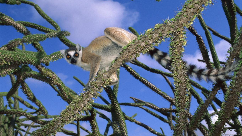 Download Wallpaper Lemur Funny Grass Eat Animal Cool