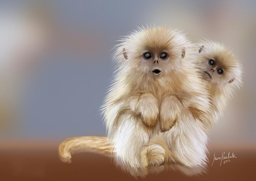 Download Wallpapers Monkey Cub Free Desktop Wallpapers Orangutan