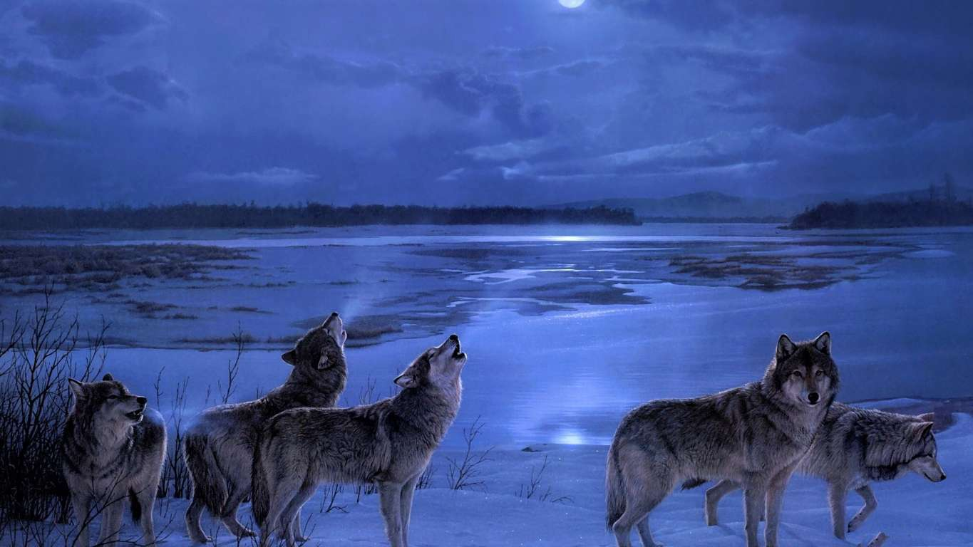 Download Wolf Wallpaper Phone Cool Wallpaper Is