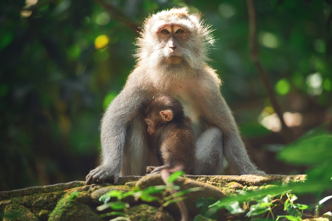 Free Download Monkey Pictures Desktop Backgrounds Hd