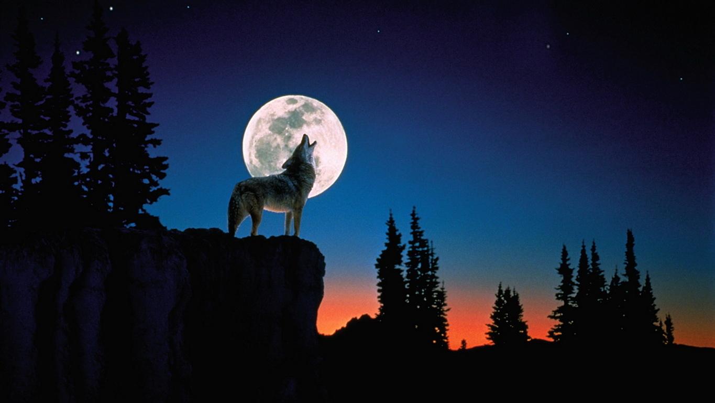 Full Hd P Wolf Hd Desktop Background X Wallpaper Wallpaper