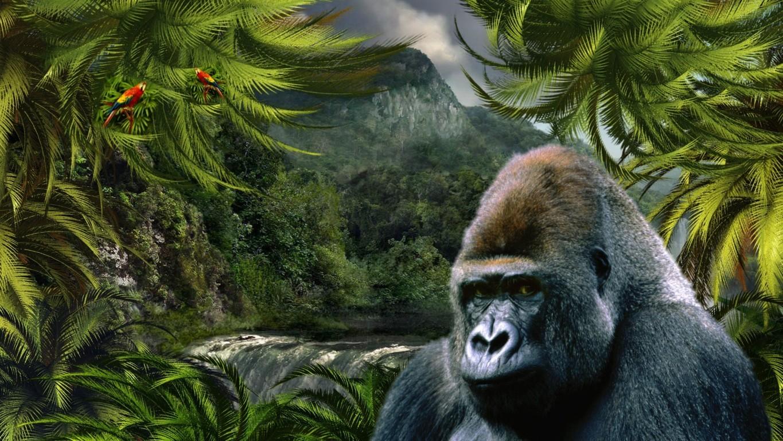 Gorilla 4k Hd Desktop For 4k Ultra Hd Tv Tablet Wallpaper
