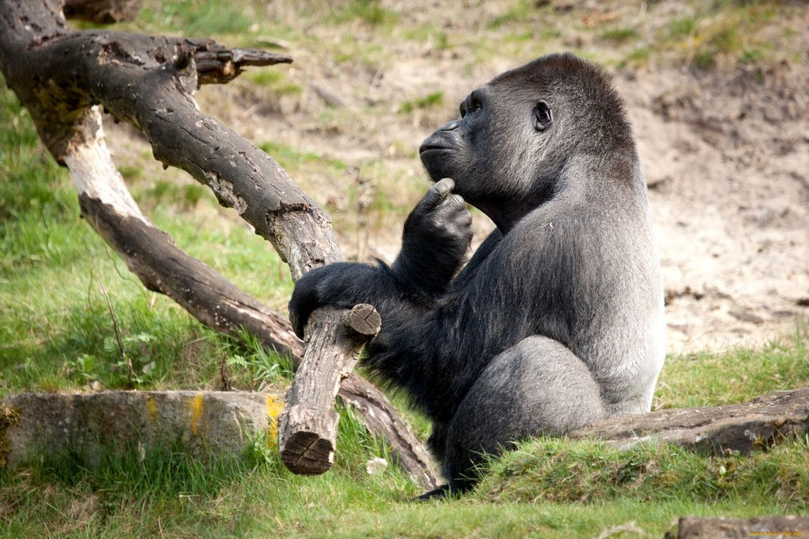 Gorilla Girl Monkey Forest Girls Humor Cute Situation