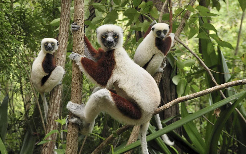 Grass Lemur Iphone 8 6 6s Wallpaper Background 7