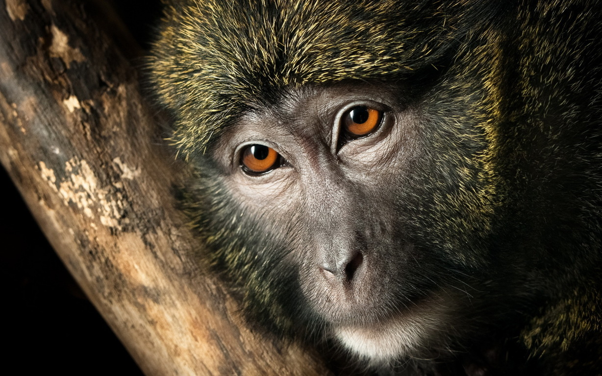 Monkey Latest Hd Wallpapers Download Free