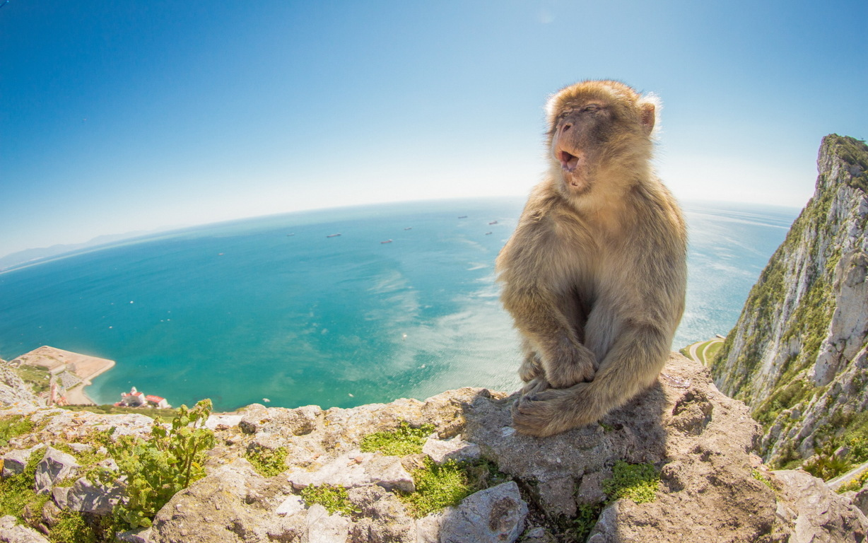 Monkey Wallpapers Tiptop 3d Hd Wallpapers Collection Amp