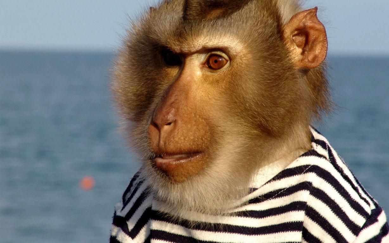 Monkeys Wallpaper