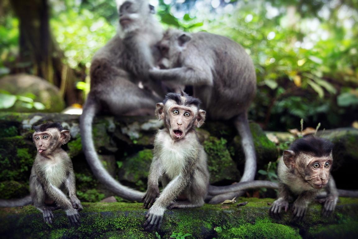 New Hd Wallpaper Of Baby Monkey Hd Famous Wallpaper Cute