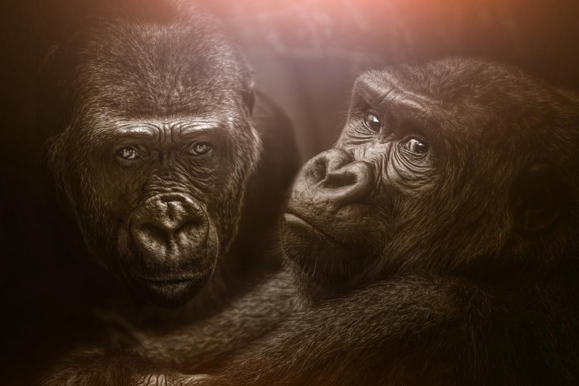 Rampage Movie Wolf Gorilla Wallpapers 4k