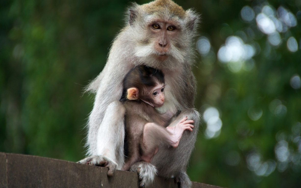 Top 16 Most Cute Beautiful Monkey Wallpaper In Hd New And