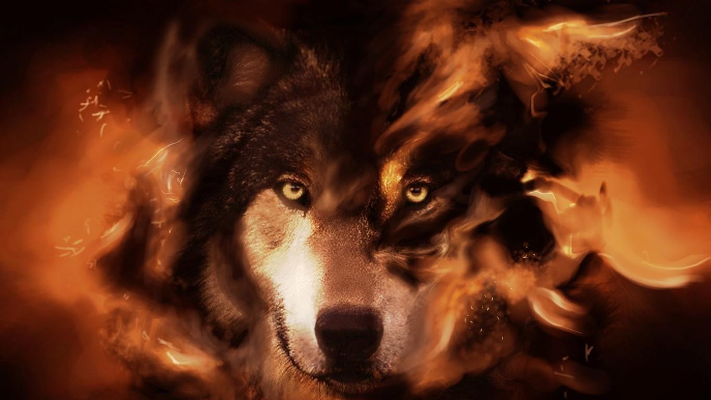 White Wolf Wallpaper Hd Download Get Hd Wallpaper Free Free