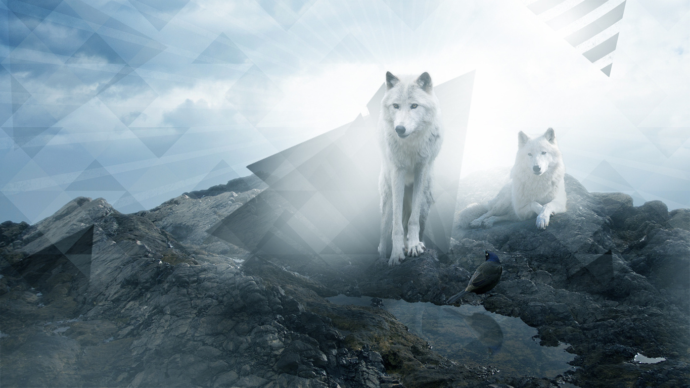 Wolf HD Wallpaper and Background
