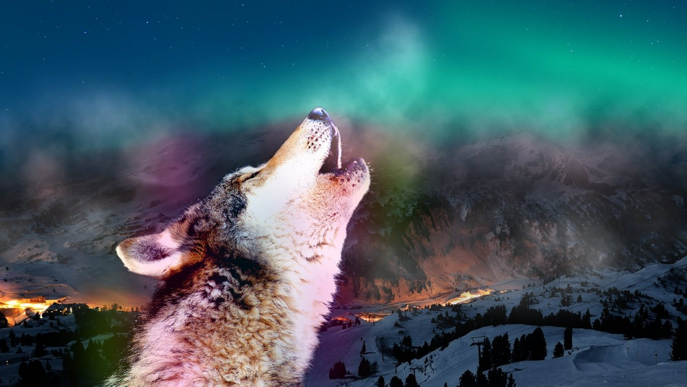 Wolf HD Wallpaper and Image