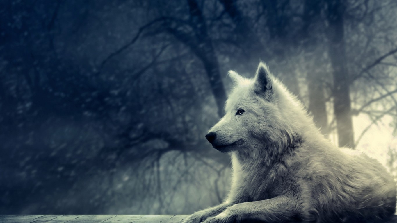 Wolf Wallpaper Hd Picture Hd Wallpaper Picture Wolf One