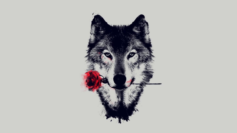 Wolf Wallpaper Photo Animals Wallpaper Hd