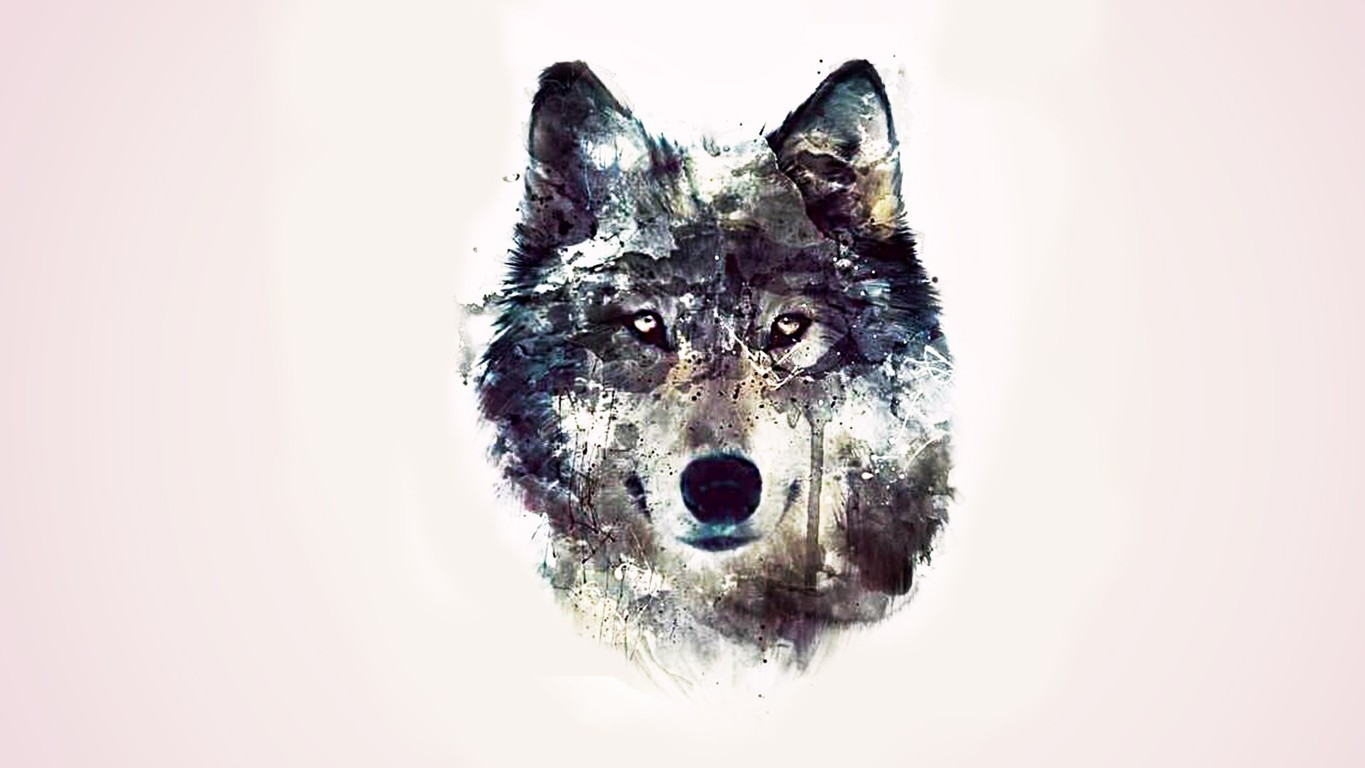 Wolf Wallpaper Picture Image