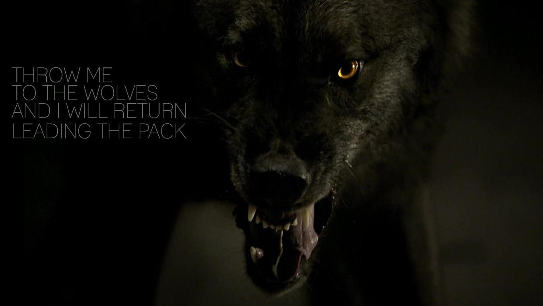 Wolves HD wallpaper