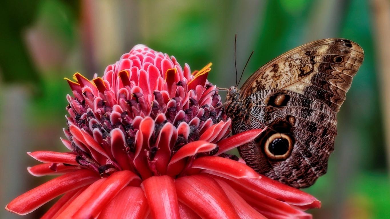Animals & Birds Butterfly Desktop Phone Tablet Wallpaper
