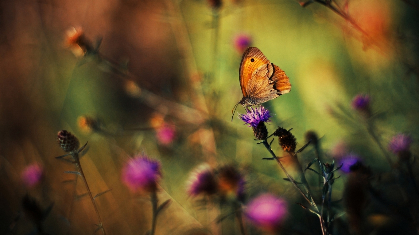 Butterfly Hd Wallpaper And Image Background