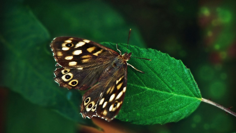 Butterfly Wallpaper For Walls