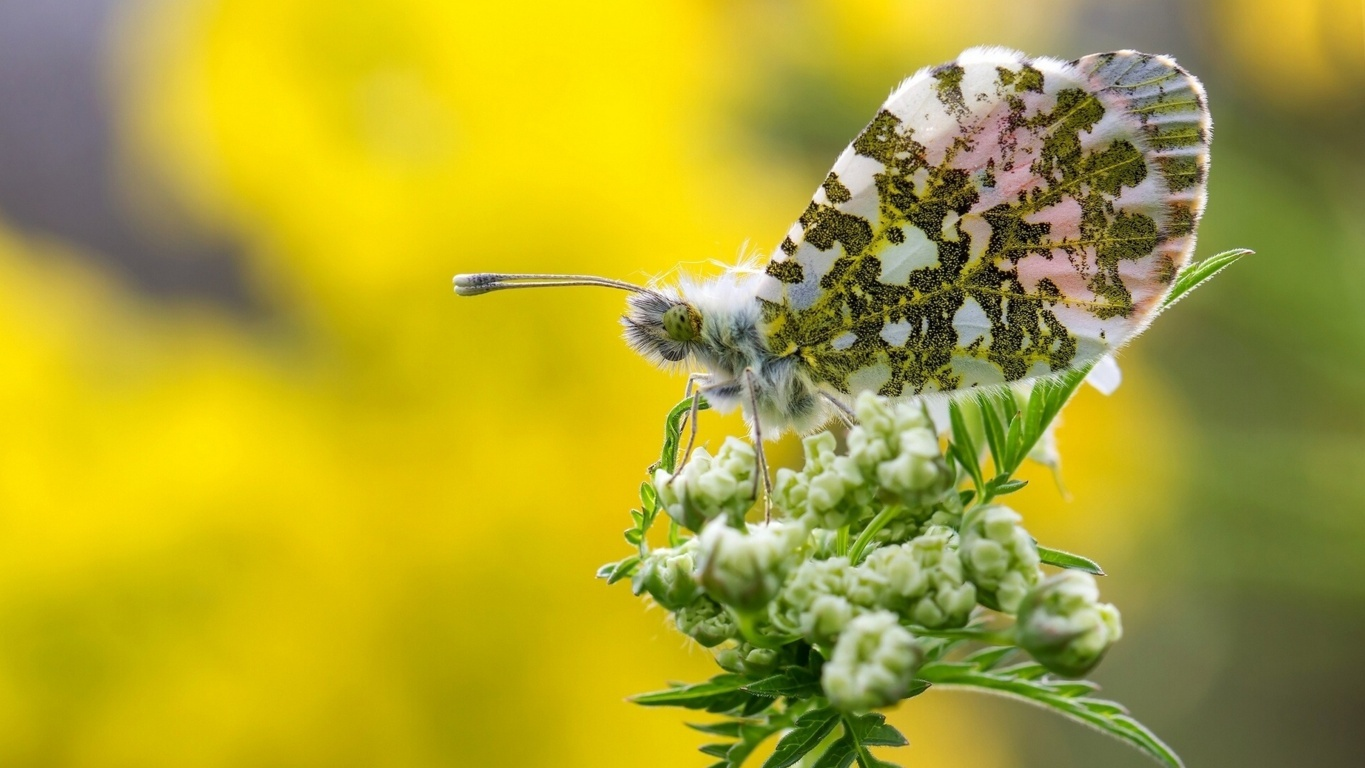 Butterfly Wallpaper Impressive Photo Butterfly Colelction Id Of