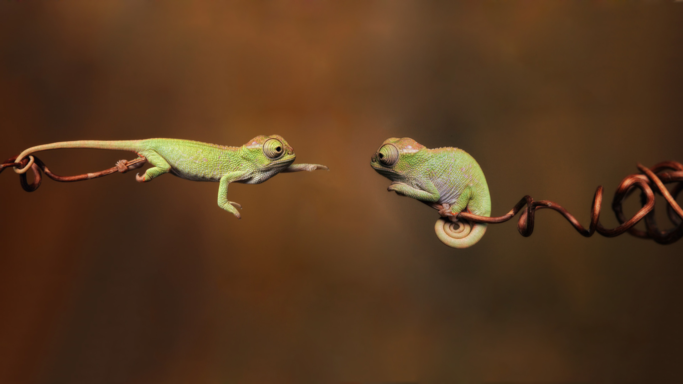 Chameleon HD Wallpaper and Background Image