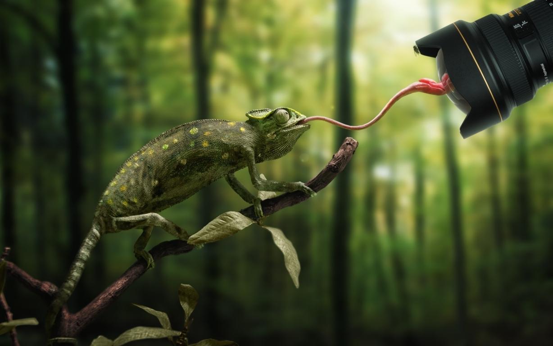 Chameleon HD Wallpaper and Background Wallpaper