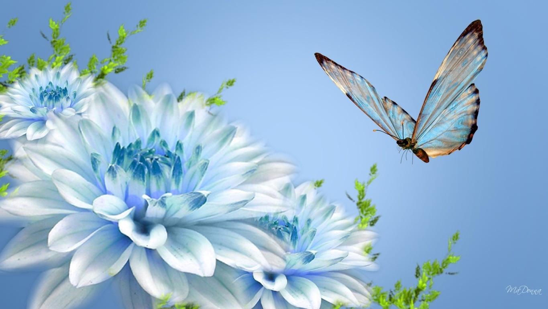 Popular Blue Butterfly Wallpaper Mobile For