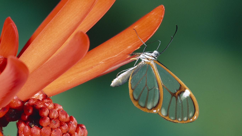 butterfly wallpaper Art